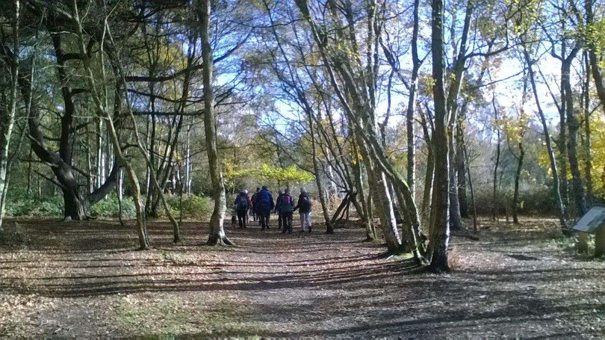 Nov Walk