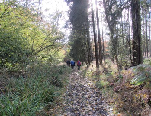 RAVE Christmas Walk Sunday 1st December 2019 – Long Crendon & Chearsley,