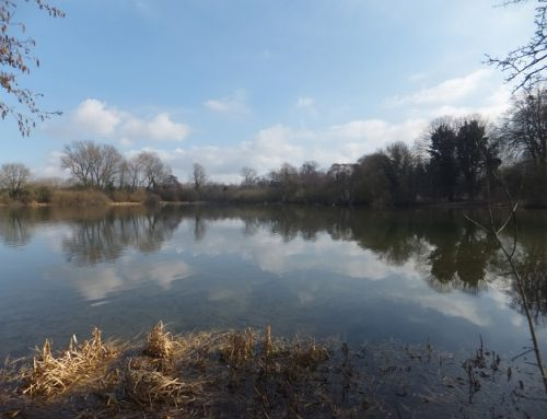 RAVE Walk 8th March 2020 – Tring Reservoirs & Grand Union Canal Circular